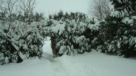 tuin met veel sneeuw