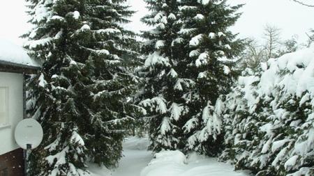dikke sneeuwlaag in de tuin